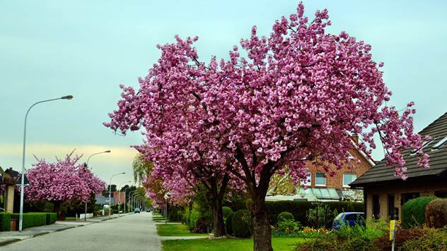 Kako odabrati drvo za savršeni vrt