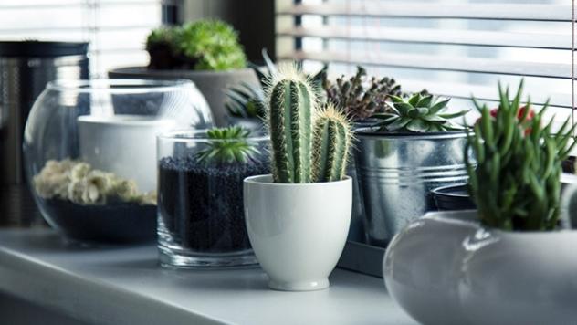 Sobne biljke koje podnose i zanemarivanje