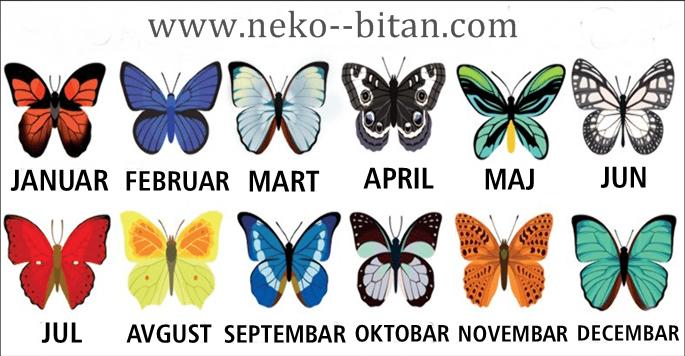 Evo šta leptir vašeg MESECA ROĐENJA otkriva o SUDBINI koja vas čeka