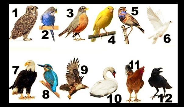 Ptica meseca u kojem ste rođeni odaje koja osobina vlada tvojom dušom.U kom mesecu ste rođeni?