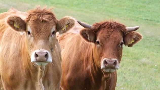 Koliko je teško živeti od proizvodnje mleka
