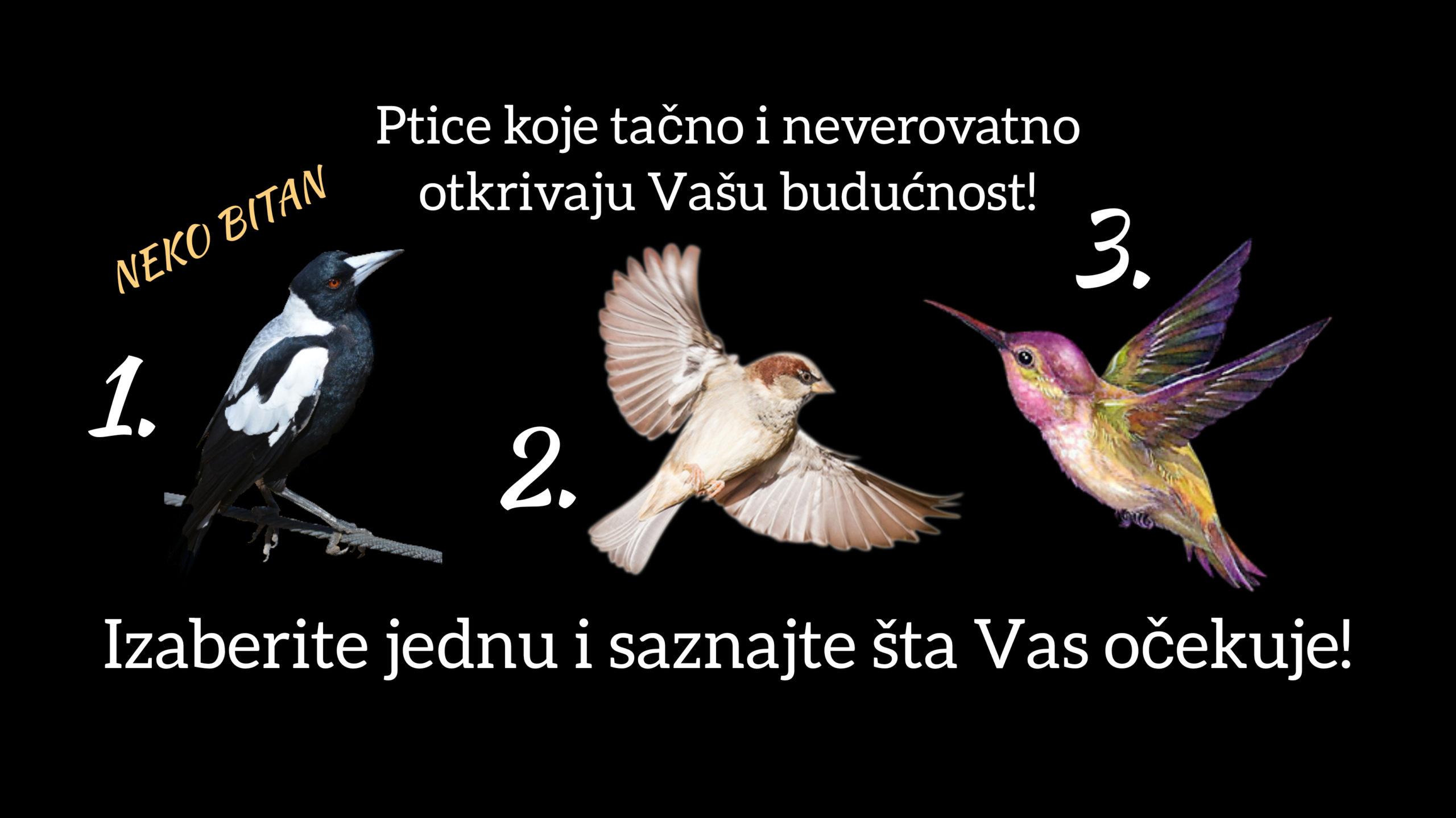 Ptice koje tačno i neverovatno otkrivaju Vašu budućnost! Izaberite jednu sa slike o saznajte šta Vas očekuje…