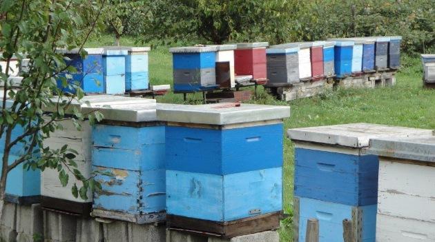 PČELARI, da li znate gde je NAJBOLJE MESTO ZA PČELINJAK?