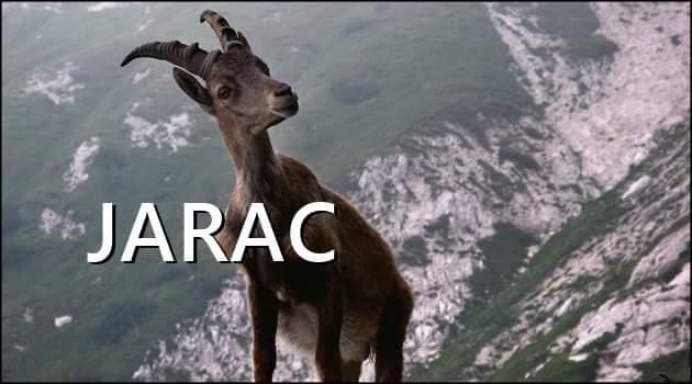 JARAC je PONOSAN i HRABAR. On je uvek KORAK ISPRED SVIH i njemu niko NIJE NI DO KOLENA!